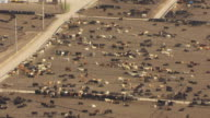 MS AERIAL ZI View of cattle in feedlot in Ford County / Kansas, United States