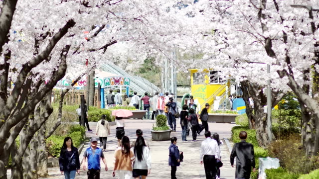 View of cherry blossom street and tourists in Seoul Children's Grand Park