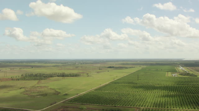 WS AERIAL View of citrus orchards / Lake Okeechobee, Florida, United States