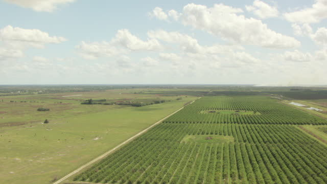 MS AERIAL View of citrus orchards / Lake Okeechobee, Florida, United States