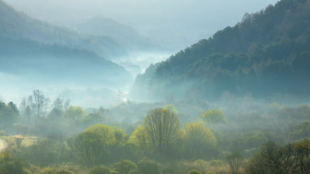 View of Cloud Sea filling Tranquil Forest at dawn