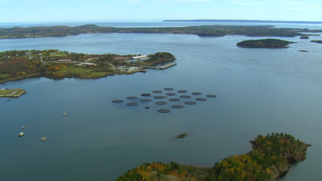WS AERIAL View of Cobs cook bay fish farming in front of dock / Maine, United States
