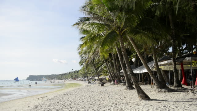 WS View of coconut trees on White Beach / Boracay, Philippines