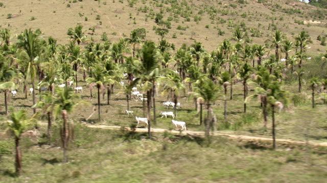 WS AERIAL View of coconut trees / Rio de Janeiro, Brazil