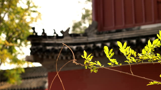 A View of Dajue Buddhist Temple in Beijing, China