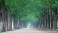 WS View of Damyang Dawn Redwood Metasequoia road / Damnyanggun, Jeollanam-do, South Korea