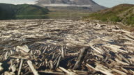 WS AERIAL TU View of dead trees in Spirit Lake against Mount St Helens / Washington, United States