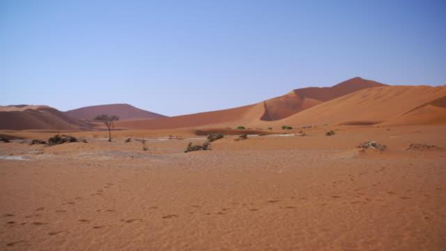 WS PAN View of Desert landscape with sand dunes / Etosha National Park, Namibia