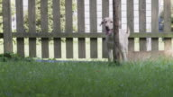 MS SLO MO TS View of dog running across back yard / New Orleans, Louisiana, USA
