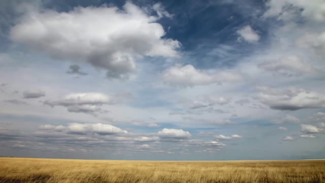 WS T/L View of Dramatic clouds on golden prairie with sun and shadows rolling across landscape / Augusta, Montana, United States