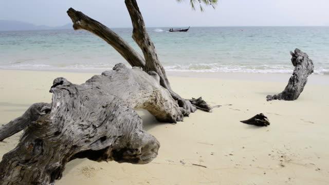 WS View of Drift wood on sandy beach and long tail boat at sea, hat chao mai marine national park / Ko Kradan, Trang, Thailand