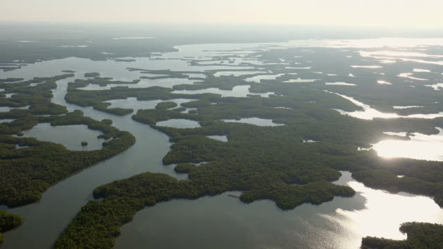 WS AERIAL POV View of Everglades National Park / Florida, United States