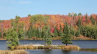 WS View of Fall color in Algonquin Park and floating river / Whitney, Ontario, Canada