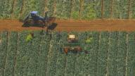 WS AERIAL ZI View of farmer loading broccoli in crates on trailer / Werribee, Victoria, Australia
