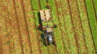 WS AERIAL View of farmer loading broccoli in crates on trailer / Werribee, Victoria, Australia