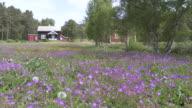 WS View of farmhouses / Rauland, Telemarken, Norway