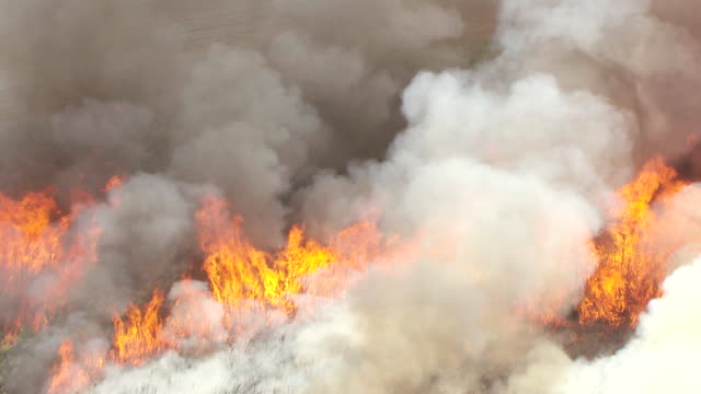 MS AERIAL ZO View of fire and burning sugarcane and fire in farm land landscape / Lake Okeechobee, Florida, United States