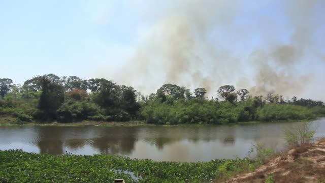 MS View of fire at forest / Corumba, Mato Grosso do Sul, Brazil