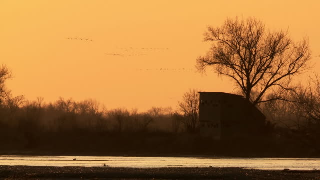 MS View of Flocks of Sandhill Cranes Grus canadensis flying through river plate / Kearney, Nebraska, United States