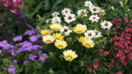 MS View of flowerbed of gazania zinnia and ageratum / Ludwigsburg, Baden-Wuerttemberg, Germany