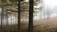 View of foggy forest at Hambaeksan mountain (Biosphere preservation district by Korea Ministry of Environment) in Autumn