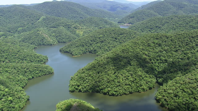 WS AERIAL View of Forest and jungle with river / Sao Paulo, Brazil