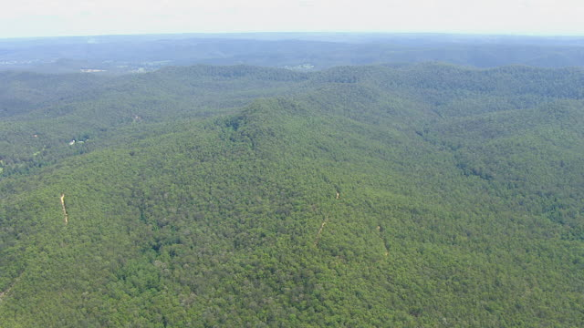 WS AERIAL View of forest / Mandalong, New South Wales, Australia