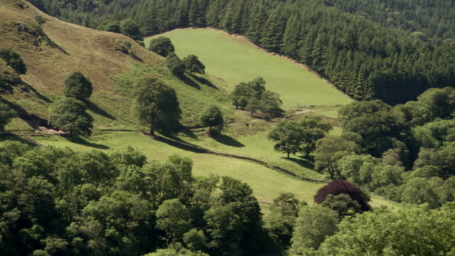 WS PAN View of forest / Powys, Wales