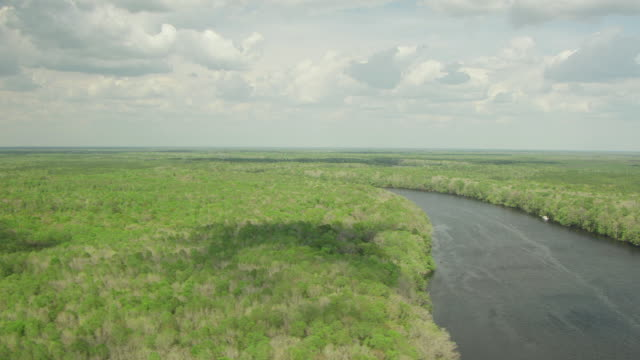 WS AERIAL View of forest with cloud formations shadows on trees in Dixie County / Florida, United States