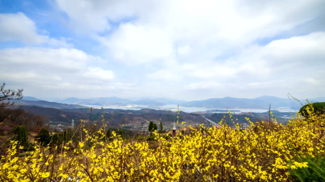 View of Forsythia and Highway in distance at Yangsuri (Famous travel destination)