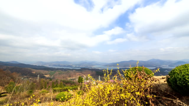 View of Forsythia and landscape with clear skyscape at Yangsuri (Famous travel destination)