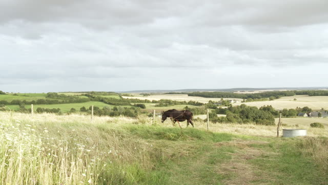 WS View of French countryside with horse grazing / Beaune, Burgundy, France