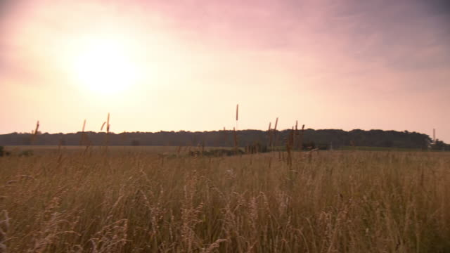 WS PAN View of Gettysburg wheat field at dusk  / Gettysburg, Virginia, United States
