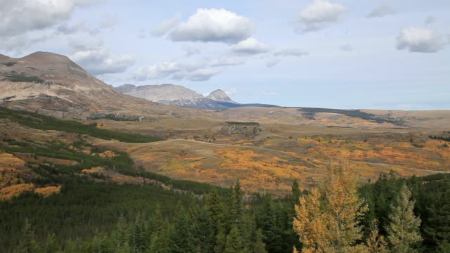 WS View of Golden trees on vast landscape with mountains in background / East Glacier, Montana, United States