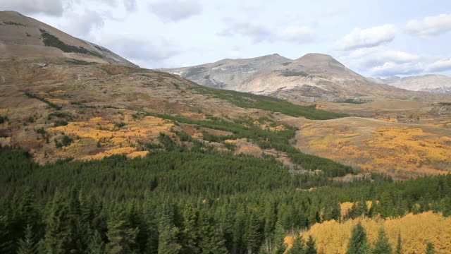WS PAN View of golden trees on vast landscape with mountains in background / East Glacier, Montana, United States