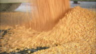 CU View of grain of maize pouring from truck through bars in ground / Washington DC, District of Columbia, USA