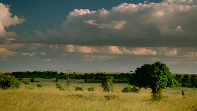 WS View of Grassland with scattered trees and cloudy sky / Masai Mara, Kenya