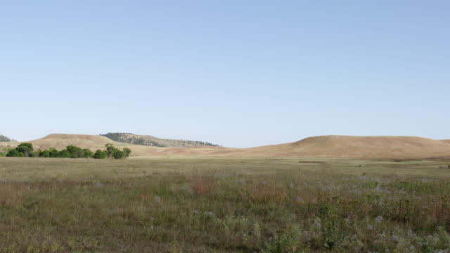 WS POV View of grassy landscape / Custer State Park, South Dakota, United States