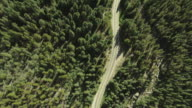 MS AERIAL View of highway 82 leading away from Aspen with dense trees surrounding highway / Colorado, United States
