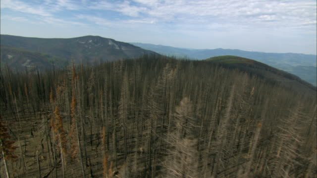 AERIAL View of hills covered with partially burnt forest / Marion, Montana, USA