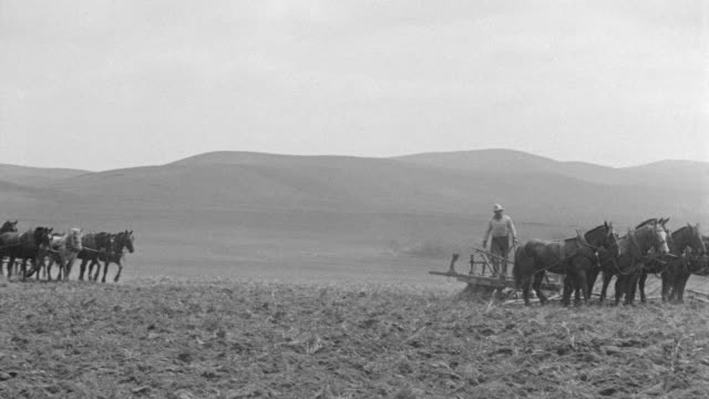 WS PAN View of horses and mules plowing field