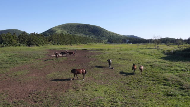 View of horses at pasture and clear sky