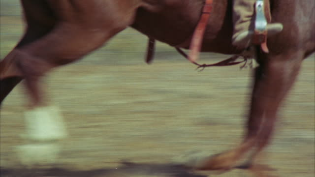 CU TS View of horses legs and cowboy feet around rodeo barrel race