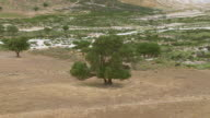 WS DS ZI ZO AERIAL View of isolated tree / Nisyros, Dodecanese, Greece
