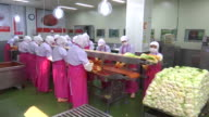 View of Kimchi production line at Kimchi factory (Popular traditional fermented Korean side dish)