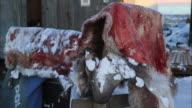 View of Kivalina caribou's skin in Alaska