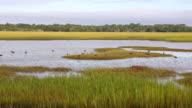 WS TS View of landscape of marsh / St. Simons Island, Georgia, United States