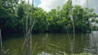 WS POV View of Louisiana Swamp