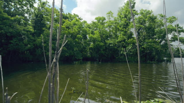 WS POV View of Louisiana Swamp