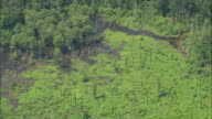 WS AERIAL View of Low level moisture off trees in swamp/ Louisiana, United States